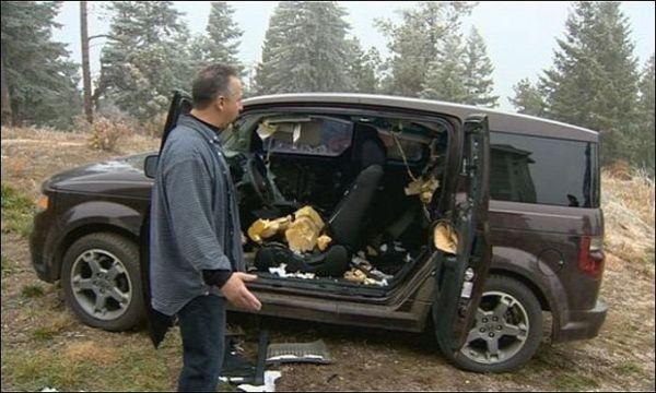 В США медведи съели минивэн