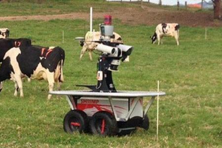 В Австралии создан робот-пастух