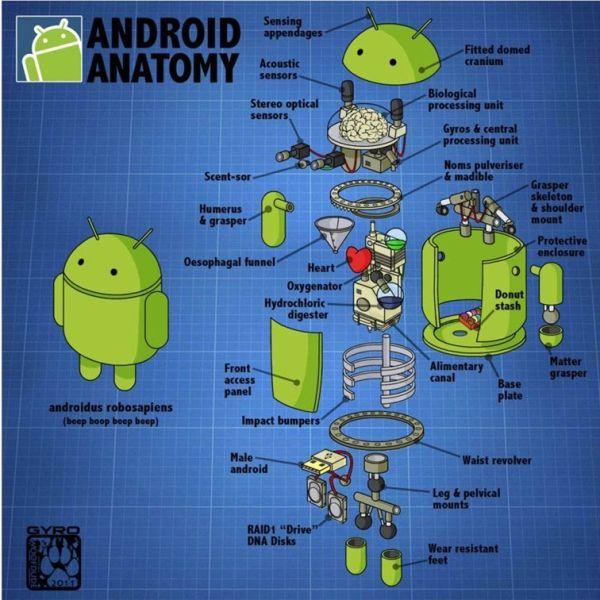 Девять интересных фактов об ОС Android